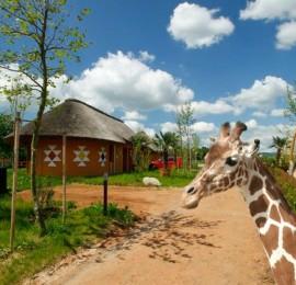 Zoologická zahrada a safari Dvůr Králové nad Labem